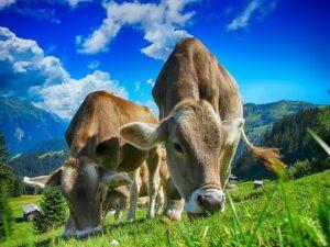 rolnictwo, biznes, praca